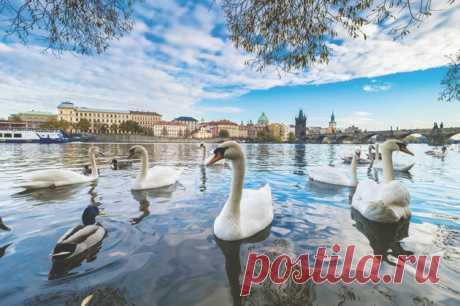 Злата Прага: секретные адреса от местных жителей
