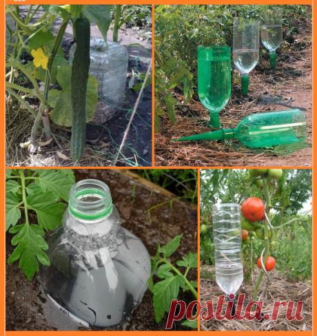 Бюджетный способ полива с помощью ПЛАСТИКОВЫХ бутылок