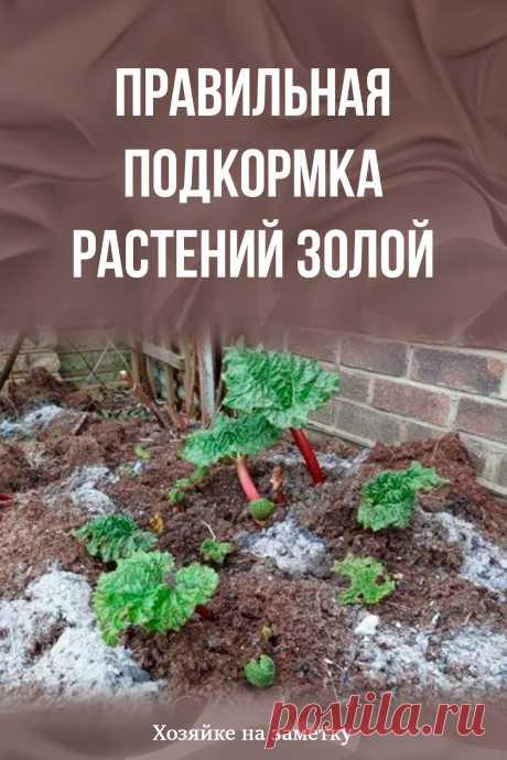 Правильная подкормка растений золой