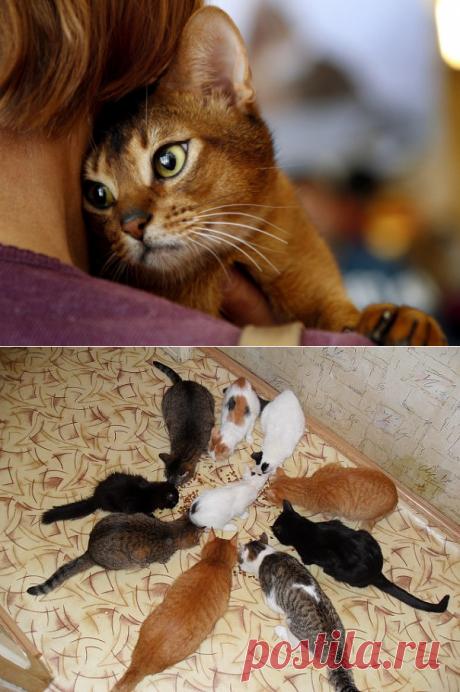 Кошки могут лечить болезни.