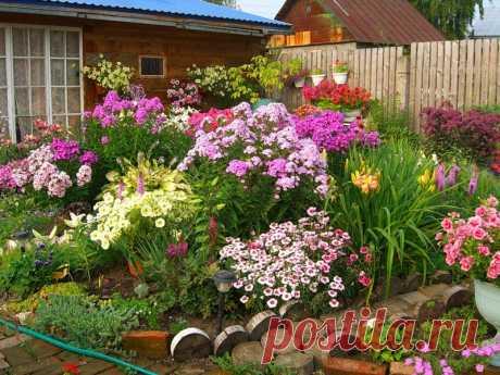 Цветы, которые можно сеять под зиму  Цветы посаженные под зиму будут отличаться хорошим ростом, устойчивостью к болезням и погодным условиям.   Так же, посеяв семена под зиму вы освобождаете себе время весной. А его как раз тогда и не х…
