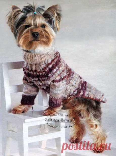 Одежда для собак своими руками - простой вязаный свитер теплый