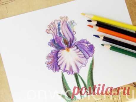Ирис карандашами — Сделай сам, идеи для творчества - DIY Ideas