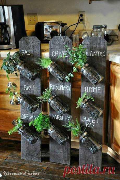 Dicas para a sua Horta: Conheça Plantas e Formas de Plantio