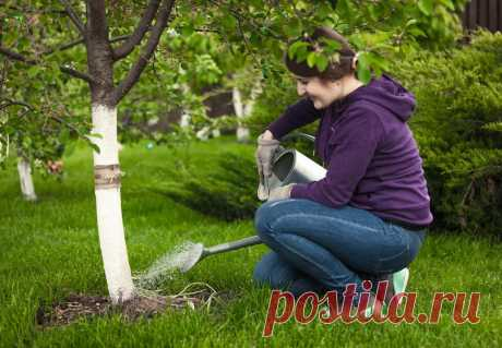 Как правильно поливать сад осенью Что дает осенний полив сада и как правильно его осуществлять