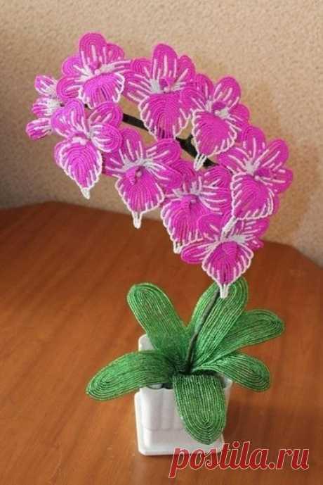 Орхидеи из бисера! Какие же они потрясающие, правда? / Западло