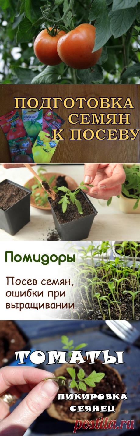 Помидоры: рассада, выращивание, когда сеять