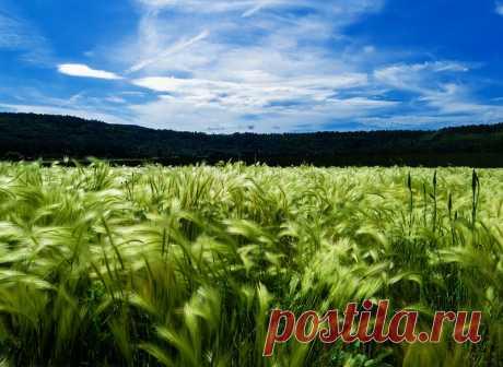 Ретарданты — синтетические вещества различной химической природы, способные подавлять рост стеблей и побегов. Представляют собой одну из разновидностей регуляторов роста. Подробнее на сайте интернет-магазина УкрСемена