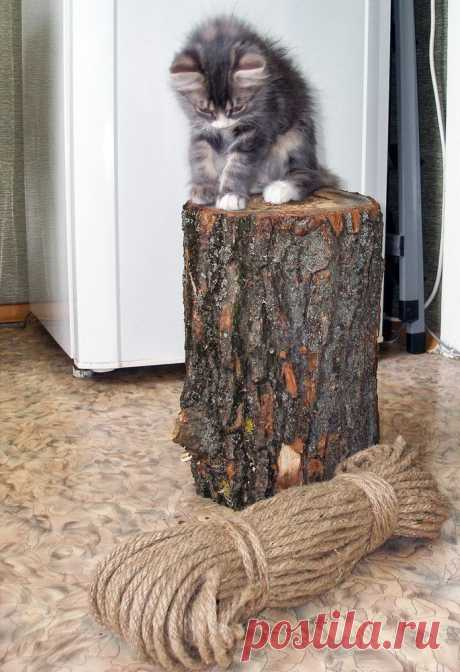 Как сделать когтеточку для кошки самостоятельно своими руками: идеи, фото