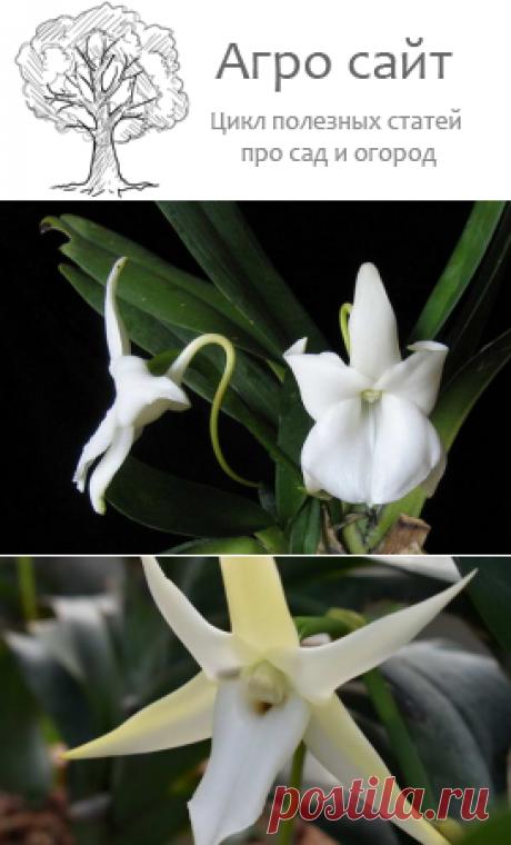 Виды и сорта орхидей для начинающих