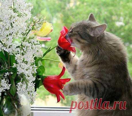 Всё о кошках. — «Весна..........блин...» на Яндекс.Фотках