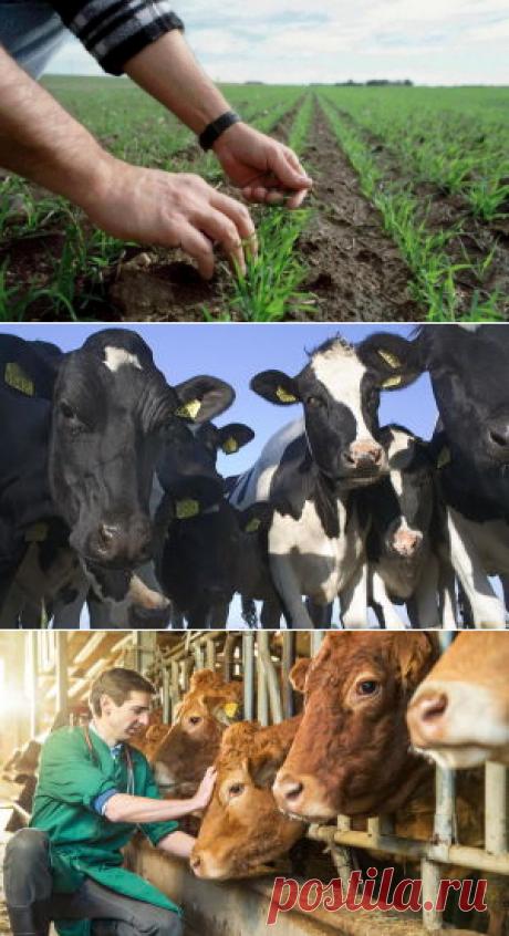Фермерские хозяйства России: настоящее и будущее - БиоКорова