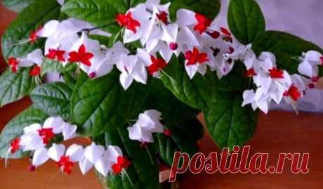 Красивейший комнатный цветок, который цветет почти круглый год — Мир интересного