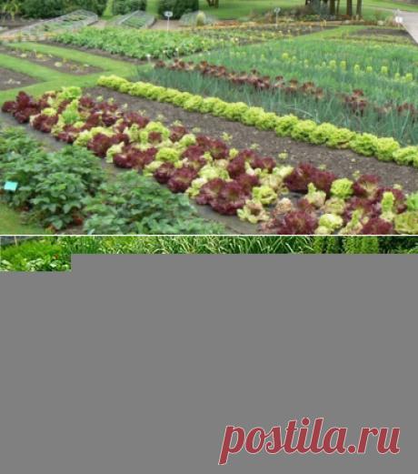 Советы огородников и садоводов — 6 соток