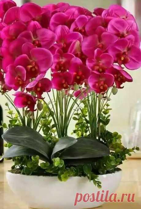 Если вам подарили орхидею  Орхидеи – растения пластичные, хорошо и сравнительно быстро приспосабливающиеся к комнатному микроклимату. Секрет успеха заключается в строгом соблюдении режимов покоя и роста, правильному их чередовании. Но это еще не все. Орхидеи достаточно требовательны к субстрату, освещенности и посуде.  В каком месте лучше разместить орхидею? Лучше всего орхидеи растут и цветут на хорошо освещенном подоконнике. Однако нельзя ставить растение под прямые солн...