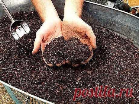 ЛУЧШИЕ УДОБРЕНИЯ ДЛЯ ОВОЩЕЙ 1.Хлебная закваска для огурцов Чтобы получить богатый урожай огурчиков,нужно их регулярно подкармливать! Для этого отлично подойдет хлебная закваска. Приготовить ее просто! Наполните ведро на 2/3 нарезанными корочками черного хлеба и залейте водой. Придавите чем-нибудь тяжелым.Иначе корки будут всп