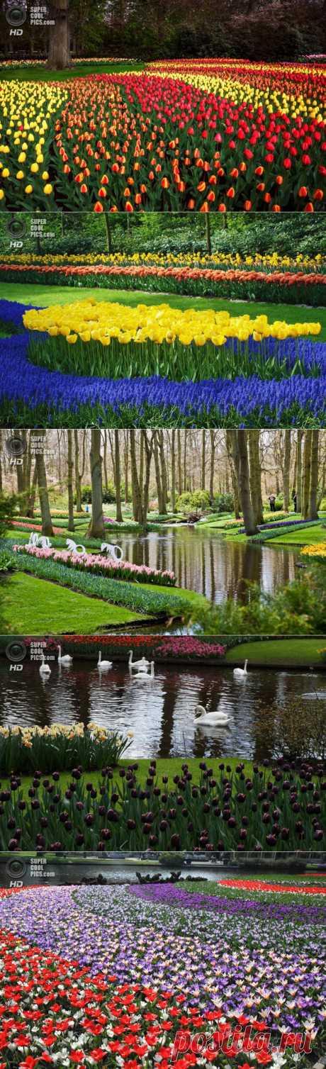 Королевский парк цветов - Фишки.нет
