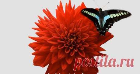 Сказочный таймлапс, объединивший кадры распускающихся цветов и движущихся насекомых