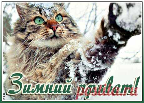 Зимняя картинка привет