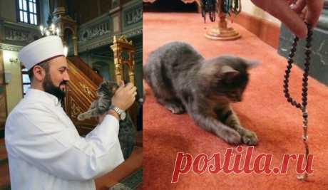 Как христиане, мусульмане и буддисты относятся к кошкам? | Много-кото-мама | Яндекс Дзен