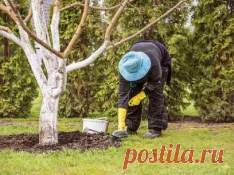 Зачем нужна перекопка приствольных кругов деревьев осенью Русский фермер