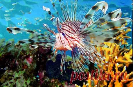 Жители подводного мира