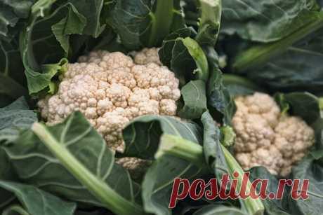 Рецепты изцветной капусты: простые инедорогие