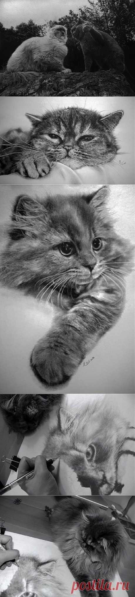 """""""Я рисую портрет кота..."""" . Paul Lung - 37-летний художник из Гонг-Конга, начал рисовать в 2004, изучив множество литературы и форумов в Интернете, посвященных реалистичному рисованию карандашом.  Главные его музы - 4 кошки, живущие у него дома; он фотографирует их и затем делает рисунки с этих фото.   Любовь к этим пушистым и игривым зверькам отображается и оживает на листе бумаги, когда автор, беря в руки карандаш, старательно вырисовывает милые мордашки котиков."""
