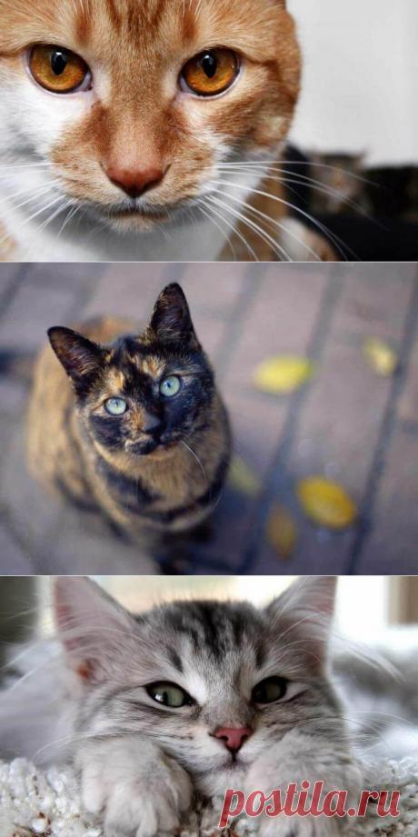 Почему кошки любят смотреть в глаза
