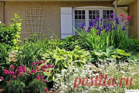 Как сделать клумбу постоянного цветения ? — Садоводка