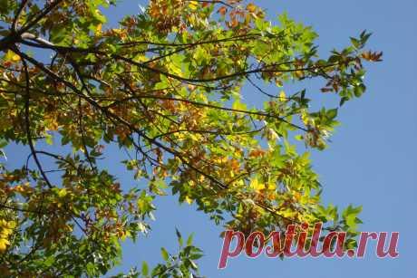 Яркие краски осени.