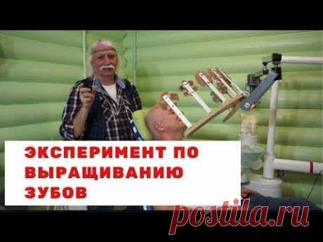 Эксперимент по выращиванию зубов - Александр Тюрин