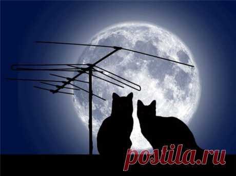 ИСЦЕЛЕНИЕ В ПОЛНОЛУНИЕ. С полнолунием связан ритуал, позволяющий войти в поток убывающей Луны и избавиться почти от любой болезни. Для этого после полнолуния в шестой лунный день надо увидеть, находясь на открытом воздухе, Луну на ее восходе. Затем встаньте спиной к Луне, широко расставьте ноги, нагнитесь и посмотрите на Луну в этом положении.