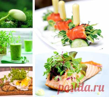 Микрогрин – большая польза. | Академия успешных поваров