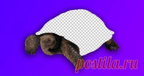😱 Оказывается, существует черепаха без панциря Природа не перестает удивлять.