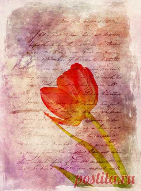 PhotoshopSunduchok - Винтажная открытка с тюльпаном