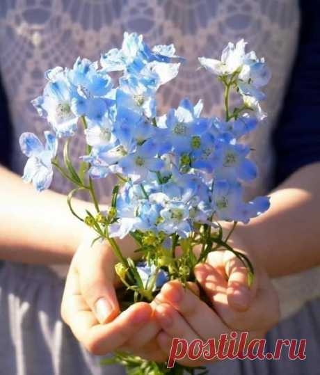 ... И хочется сказать.. в очередной раз.. ... Любите Жизнь!.. Она прекрасна!...