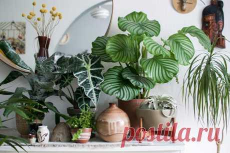 15 комнатных растений с пестрыми листьями