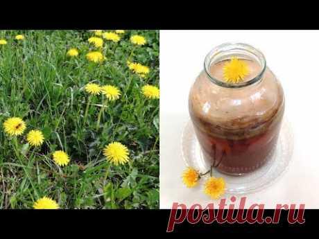 Одуванчик - чайный гриб на цветках 🌻 одуванчика с зелёным чаем. Глаза и зрение человека (kombucha).