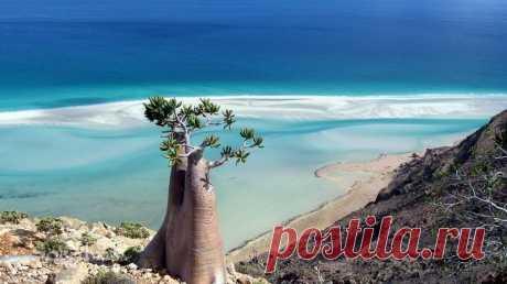 (остров Сокотра) Скромные размеры острова – 134 км в длину и 43 км в ширину – не мешают ему входить в число важнейших мировых центров биологического разнообразия.