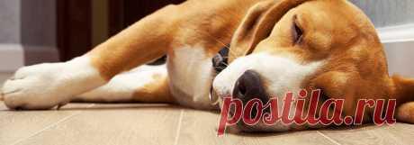 Какой ламинат выбрать, если в вашем доме живет большая собака или пушистый котенок? Какой ламинат наилучшим образом подходит для квартиры, в которой есть домашние питомцы? На этот вопрос вы найдете ответ в материале нашего эксперта из Хабаровска.  #ламинатдлясобаки#ламинатдлякошки#прочныйламинатдлясобаки#лучшийламинатдлясобаки#ламинатдлясобакикупить#Хабаровск#Stonefloor