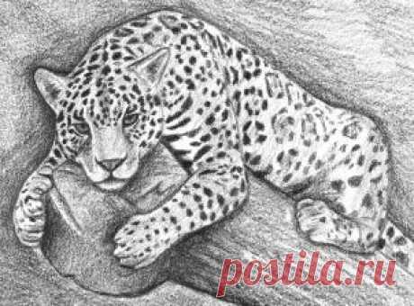 Рисуем ягуара — Сделай сам, идеи для творчества - DIY Ideas