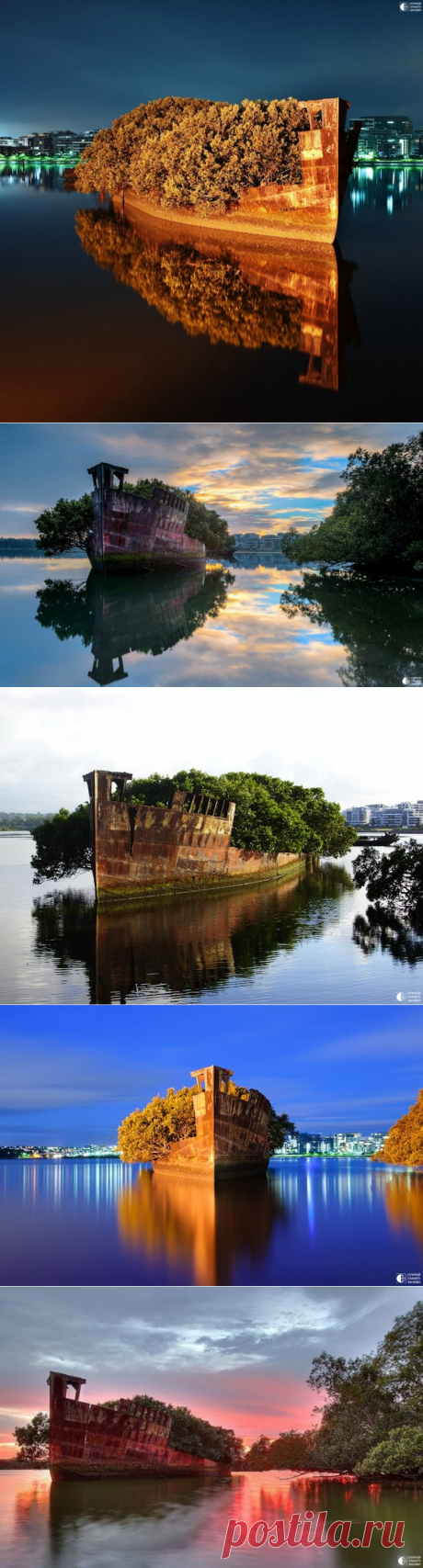 The thrown vessel SS Ayrfield, Floating forest - the floating wood - we Travel together