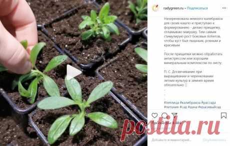 Размножение цветов черенками: как правильно укоренить