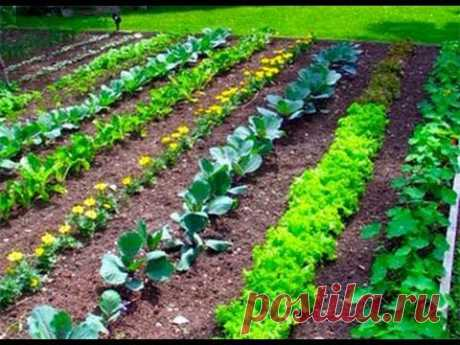 Грядки по Митлайдеру своими руками: узкие для теплицы и огорода : фото, видео
