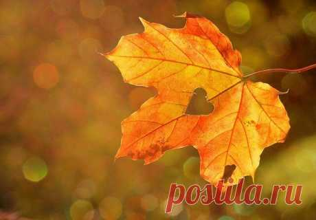 Интересное итальянское гадание на листьях | MistyMag ☘️ Древнее итальянское гадание на листве. Листья могут ответить на вопросы и предсказывать будущее | Необычный способ гадания🍁