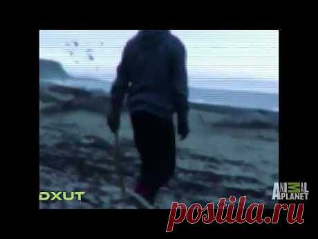 Body Found On Beach | Mermaids: Body Found HD - YouTube
