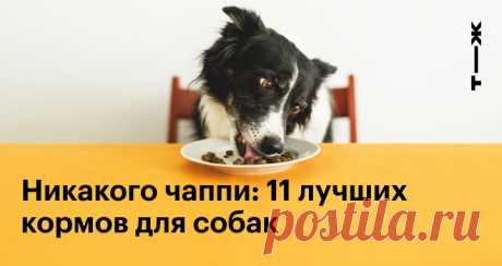 Никакого чаппи: 11 лучших кормов для собак По версии читателей Т—Ж