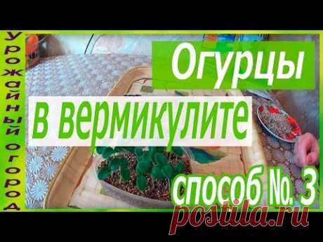 СЕЕМ ОГУРЦЫ В ВЕРМИКУЛИТ!!!ОТЛИЧНЫЙ СПОСОБ №3 - YouTube