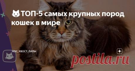 😺ТОП-5 самых крупных пород кошек в мире Среди домашних кошек есть представители, поражающие своими размерами и красотой. Они пользуются такой же популярностью среди любителей, как и мини-кошки.  Гиганты отличаются добротой и покладистым нравом. В питании и уходе они не притязательны, чем радуют своих хозяев.  Кто на свете всех крупнее? Саванна Это не просто большая кошка, а самая крупная из домашних пород. Помесь сервала и обычной кошки может весить до 15-20 кг. Рост в хо...